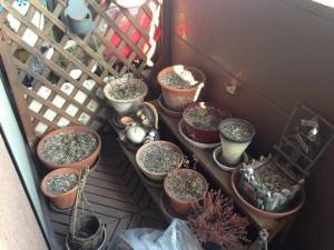 植木鉢回収 大阪